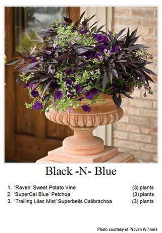 Best Container Gardening Images On Pinterest Pots Flowers