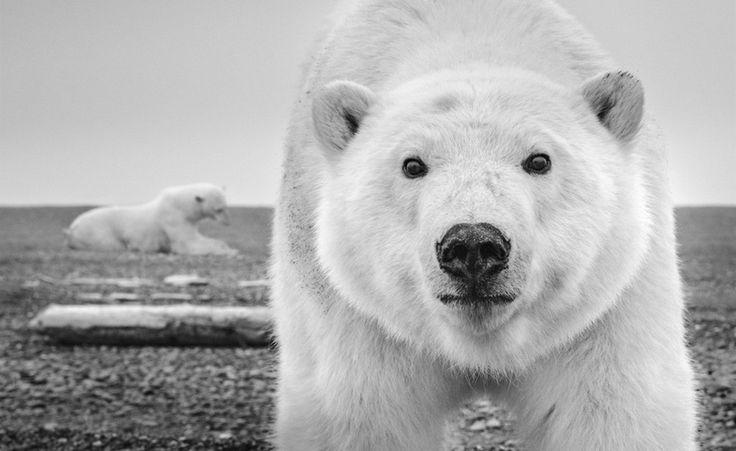 Дикие встречи фотографа Дэвида Ярроу « FotoRelax