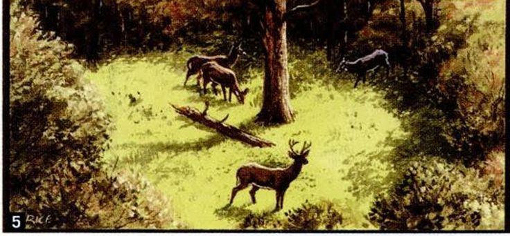 cheap food plot Food plots for deer, Food plot