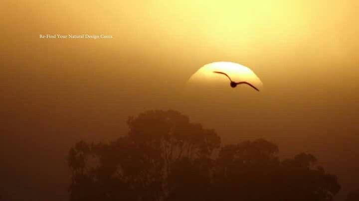 Bird flys over sun in the fog. Loxton riverfront.
