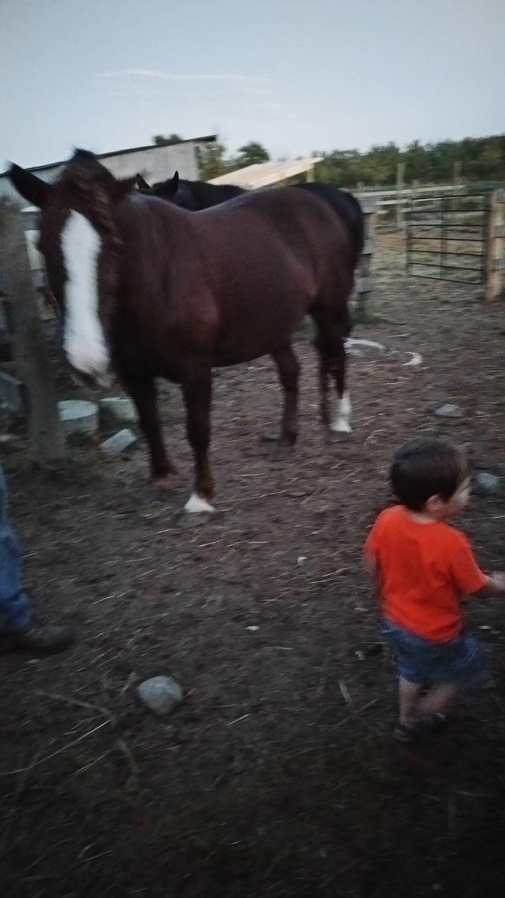 My 2 year old nephew amongst the herd