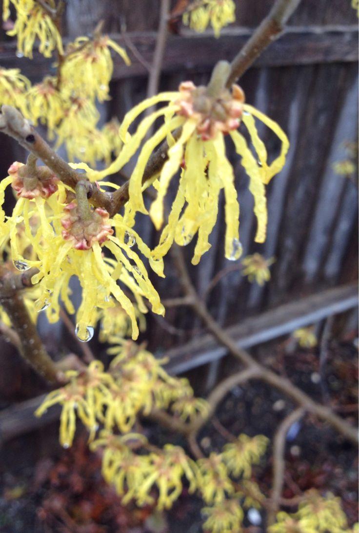 best spring flowers images on pinterest spring flowers spring