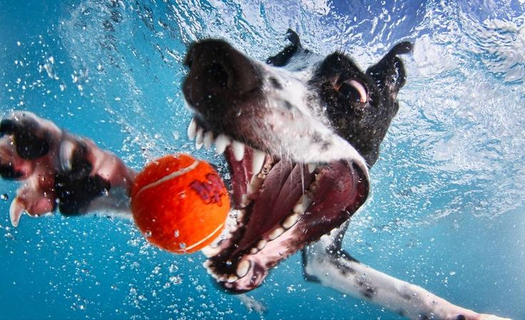 Underwater Dogs – A Hilariously Thrilling Gallery of Dogs Underwater by Seth Casteel