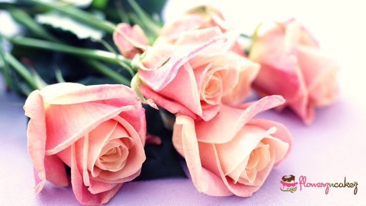 Want to make your loved one feel special? Present her a bunch of fresh roses and cherish the glance of her beaming face with @Flowerz n Cakez  Visit : http://www.flowerzncakez.com/products/flowers.htm