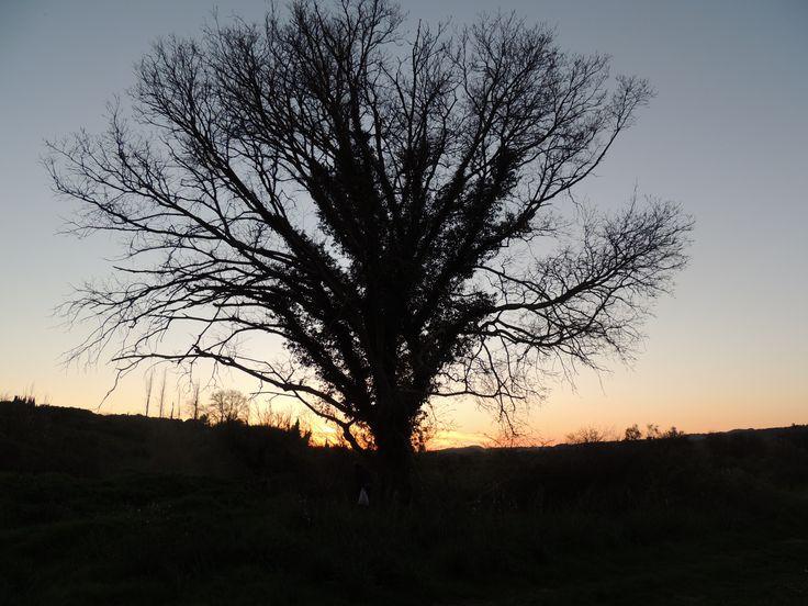 Beautiful tree standing alone