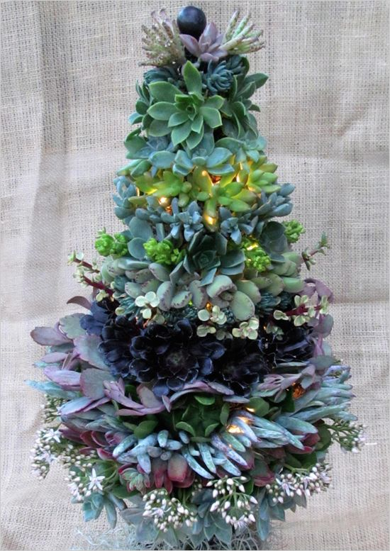 Who Doesn T Love A Good Succulent Centerpiece Well Did