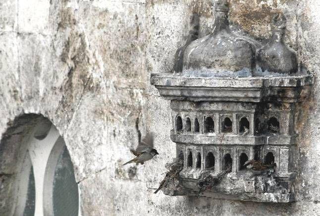 eski kuş evleri -
