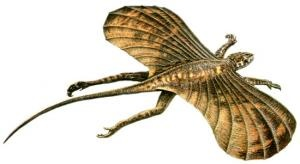 """Icarosaurus (meaning """"Icarus lizard"""") is an extinct genus of kuehneosaurid reptile from the Late Triassic (Carnian age) Lower Lockatong Formation of New Jersey, dated to around 228 million years ago.[1] It is closely related to lizards and the tuatara. Based on a partial skeleton missing part of the tail, some ribs, a hand, and parts of the legs, it was a small animal, about 10 centimeters (4 in) long from the skull to the hips. Like its relative Kuehneosaurus, it was able to glide short…"""