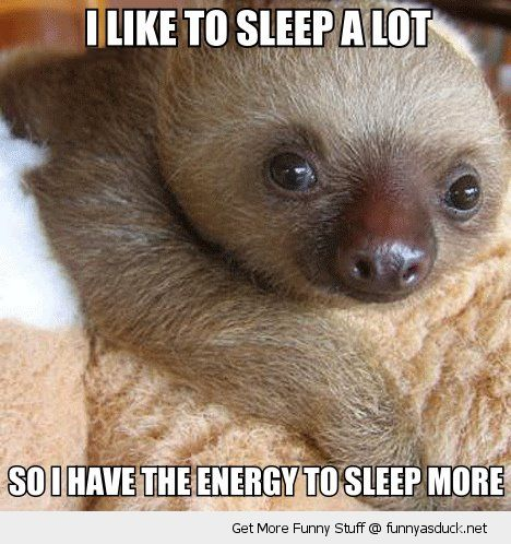 #sloth baby cute funny  | Sleep A Lot | Funny As Duck | Funny Pictures