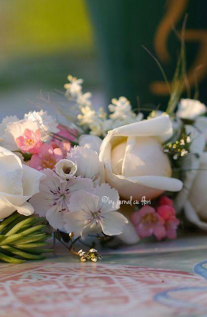 #flori de gradina in bataia soarelui #dedicatiepentrusot #trandafiri