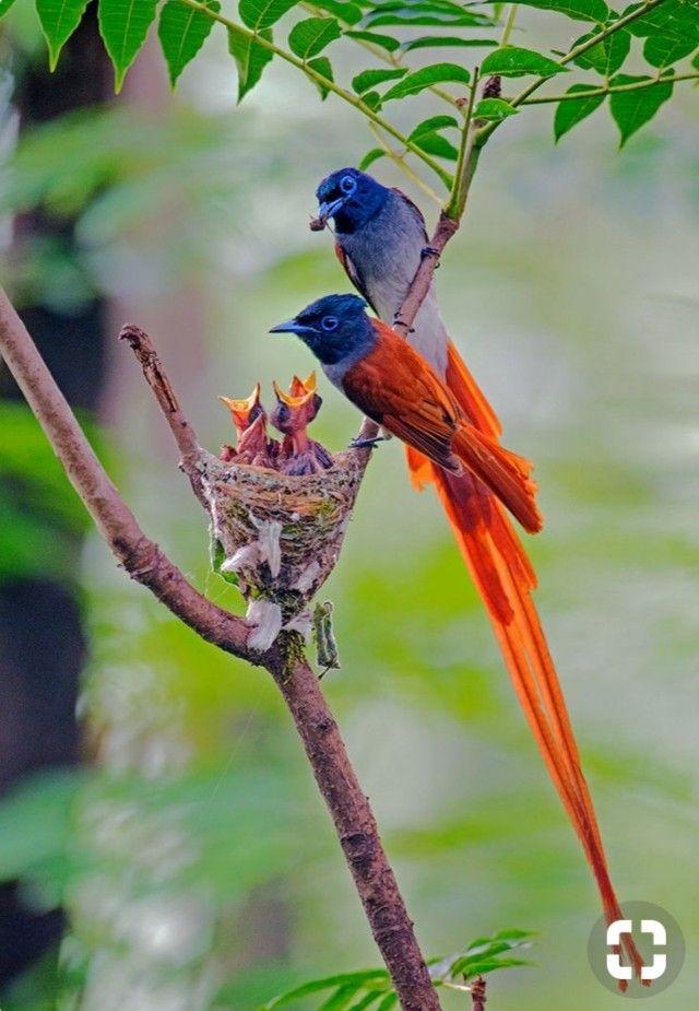Flightsoffancybirds Fotos De Aves Aves De Colores Pajaros Hermosos
