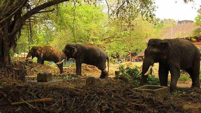 Guruvayoor Anakkotta – The Elephant Fort