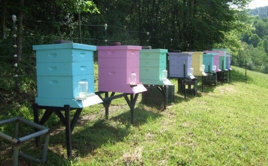 Thanks to Carolyn for sharing these beautiful beehives.  She said bees are able to find their hive more easily if they're different colors.  I would love to keep bees!