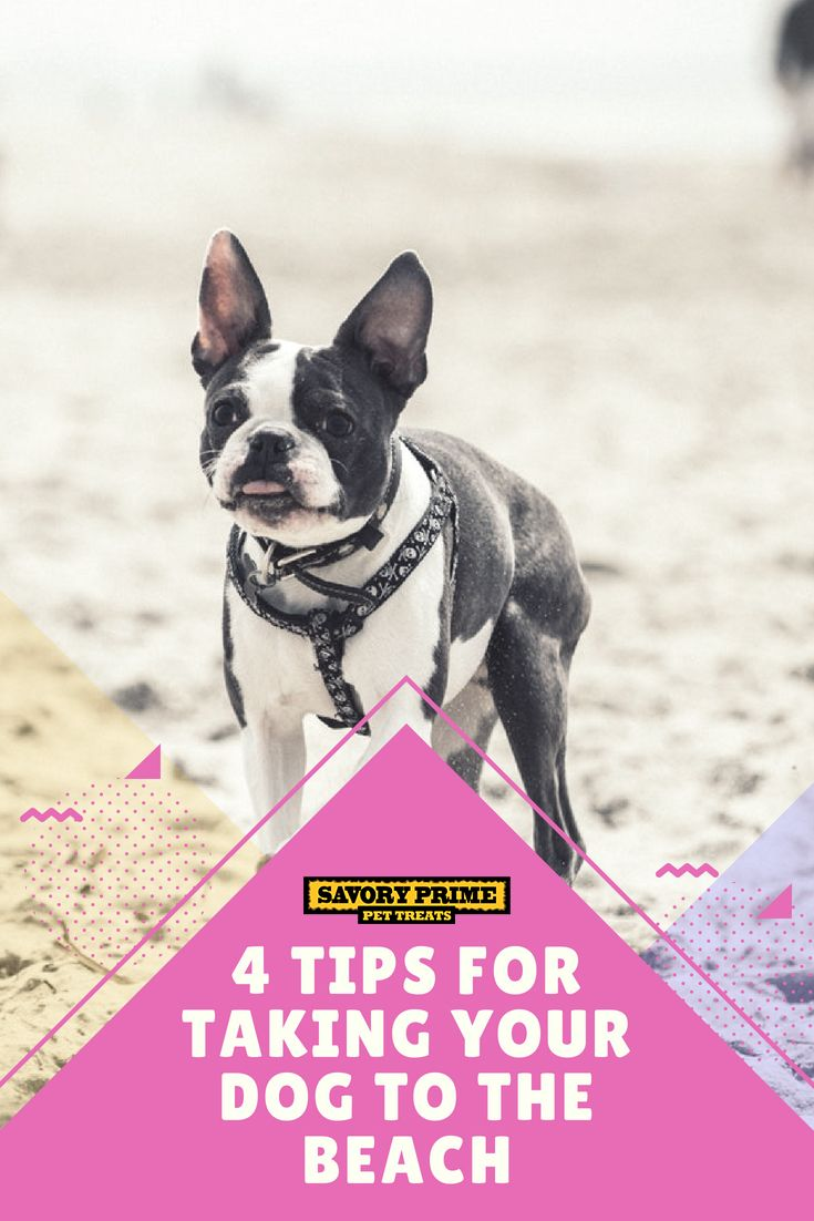 4 Tips For Taking Your Dog To The Beach Dogs Pets Dog Supplies