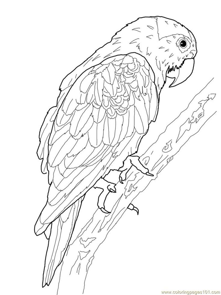Printable Parrot Coloring Pages patterns colouring