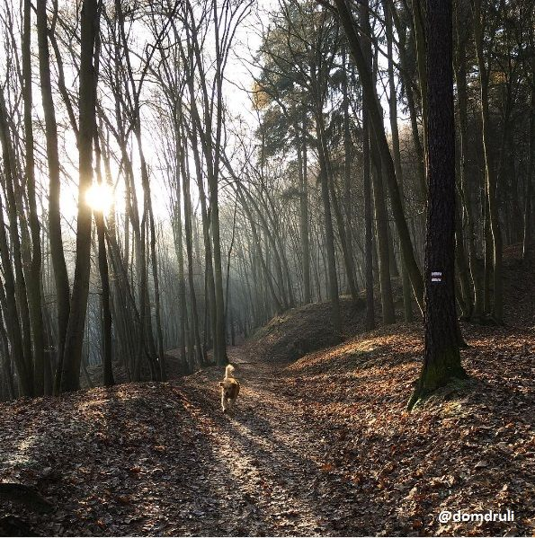 Prague park  #nature #prague #czechrepublic #dog #animal #tree #forest #sunny #sun #sunset #vsco #iloveit #walk