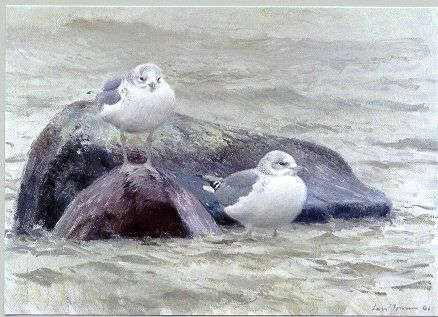 lars jonsson bird paintings - Google Search