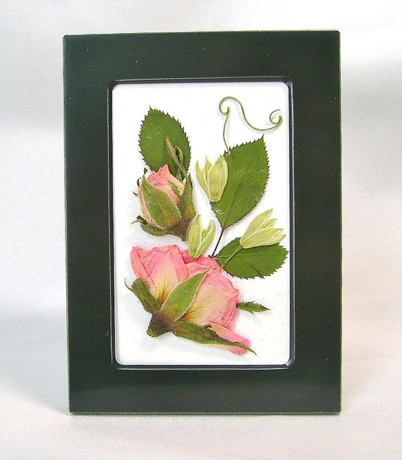 This pink rose pressed flower picture consists of buds and blossom from miniature roses in shades of pink. They are accented with small white buds and the delicate tendrils from the sweet pea vine for a finishing touch.  These artistically arranged pressed flowers are contained in a sleek black frame. A striking contrast and an intriguing mixture of natural and modern. A beautiful botanical, its a perfect little touch of nature to sit on any shelf or table alone or as part of an arrangement…