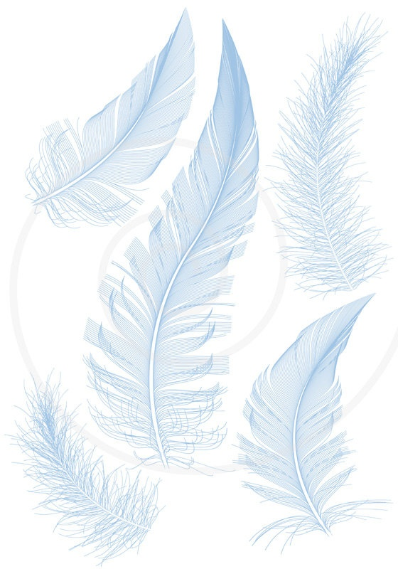 feather, i have a slight obbsesion with drawing feathers :)
