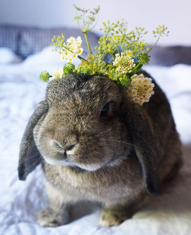 WEBSTA @ katiacarletti - I was a worried that Tilvie was a bit too cute for her own good in this picture, but we just had to play flower bun dress ups to celebrate @rohan_fraser and I getting engaged!