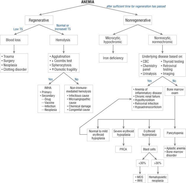 algorithms in c part 5 graph algorithms pdf