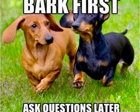 Pin By Carla Mcpeters On For Sophia Dachshund Breed Dachshund