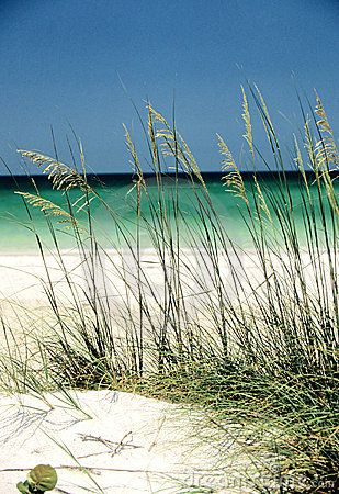 The beaches of Florida's Gulf Coast are some the most beautiful beaches..The soft white sand and warm blue waves.