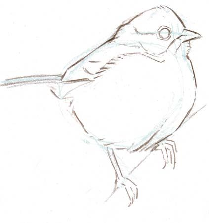 Google Image Result for http://www.johnmuirlaws.com/wp-content/uploads/2011/06/bird-sketch-15.jpg