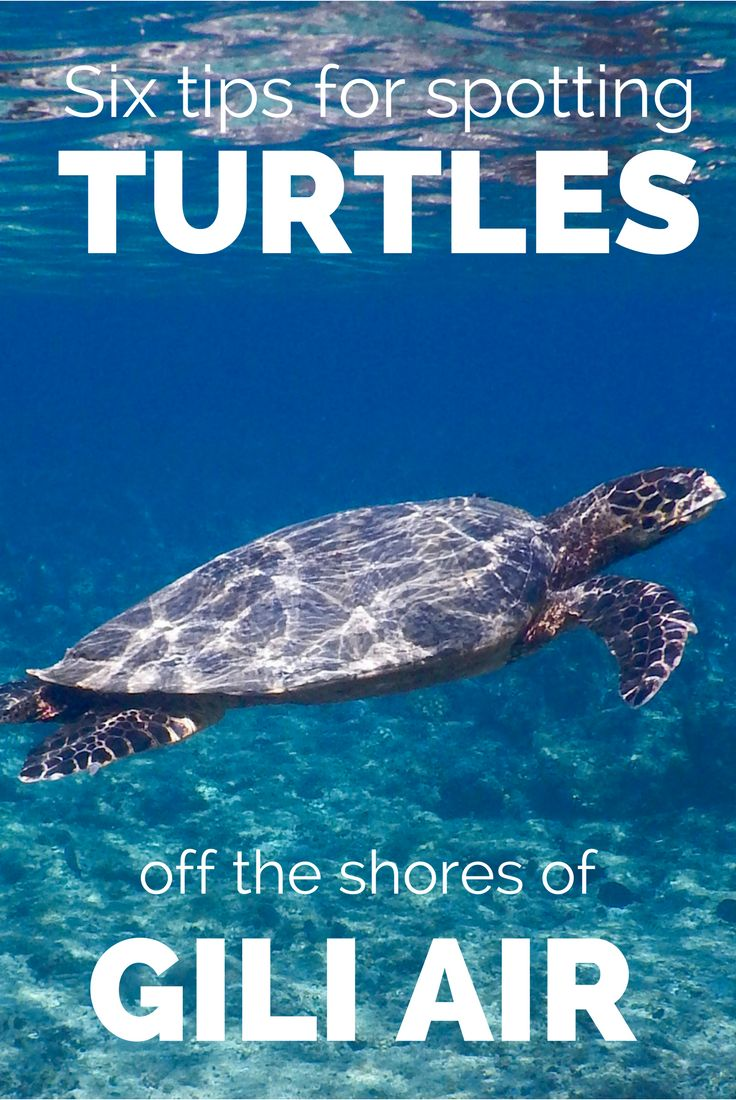 Increase your chances of swimming with turtles off the shores of the Gili Islands with our top tips!