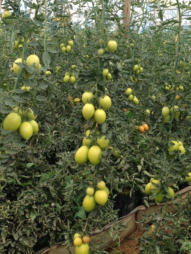 Organic field