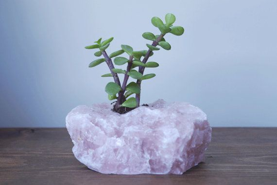 Rose Quartz Raw Crystal Succulent Planter - Healing Crystals and Stones - Crystal Decor
