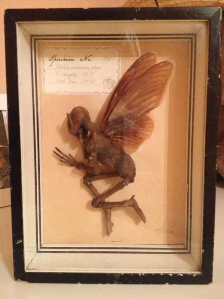 I really have seen one before-- Dead fairy :( Awww Poor ...