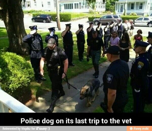I couldn't stop the tears from falling. This is such a touching photo of a Police dog on his final walk...