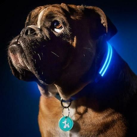 Every single dog owner wants to keep their furry loved ones safe! Buy your pup our Good Boy LED lighted dog collar to keep them seen, safe, and protected during the day and at night. The LED dog collar is perfect for walks after sundown, or for letting the dog out after dusk. Quickly spot your pup in the back yard at night to make sure they are okay! This collar is also great if you like to bring your dog camping!