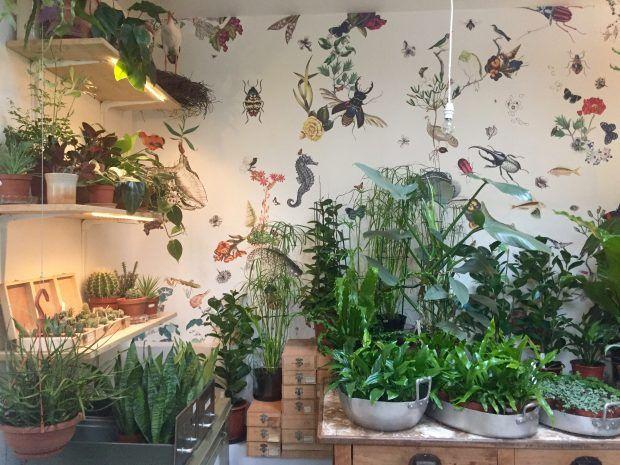 植物のある暮らし。   OVNI  オヴニー・パリの新聞