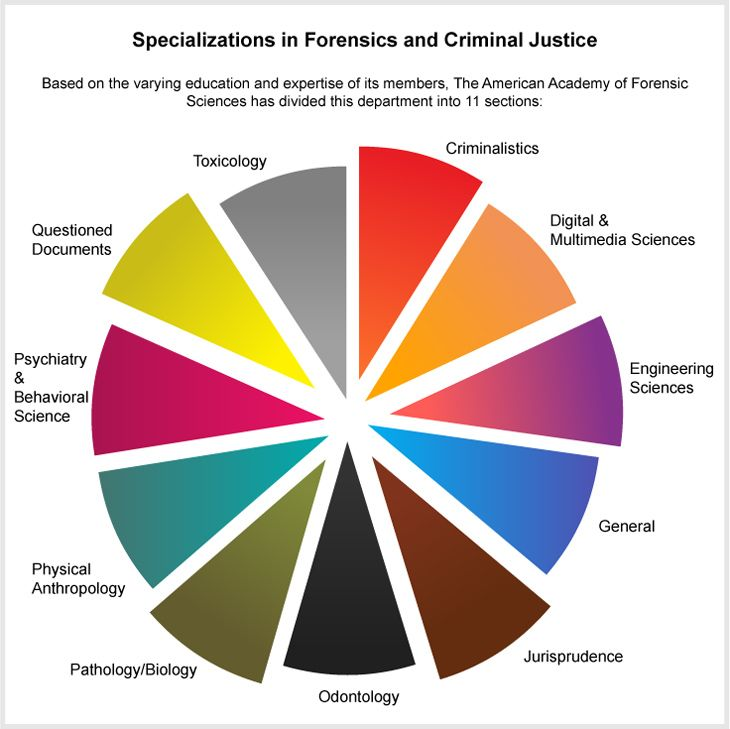 Whether you are lured by the romantic charm of investigative programs like CSI or Bones, or you are a science enthusiast who wants to serve society and community by being a part of the legal system, a career in forensics and criminal justice is the ideal career for you.
