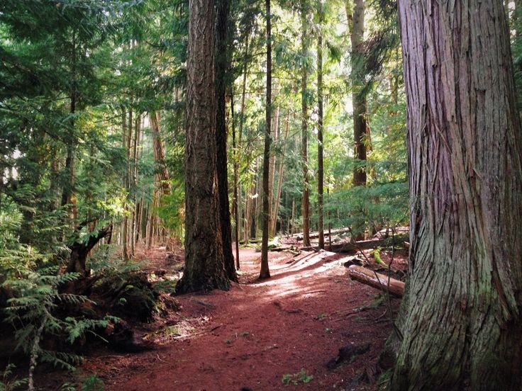 Old Growth Forest, Qualicum Beach, Vancouver Island