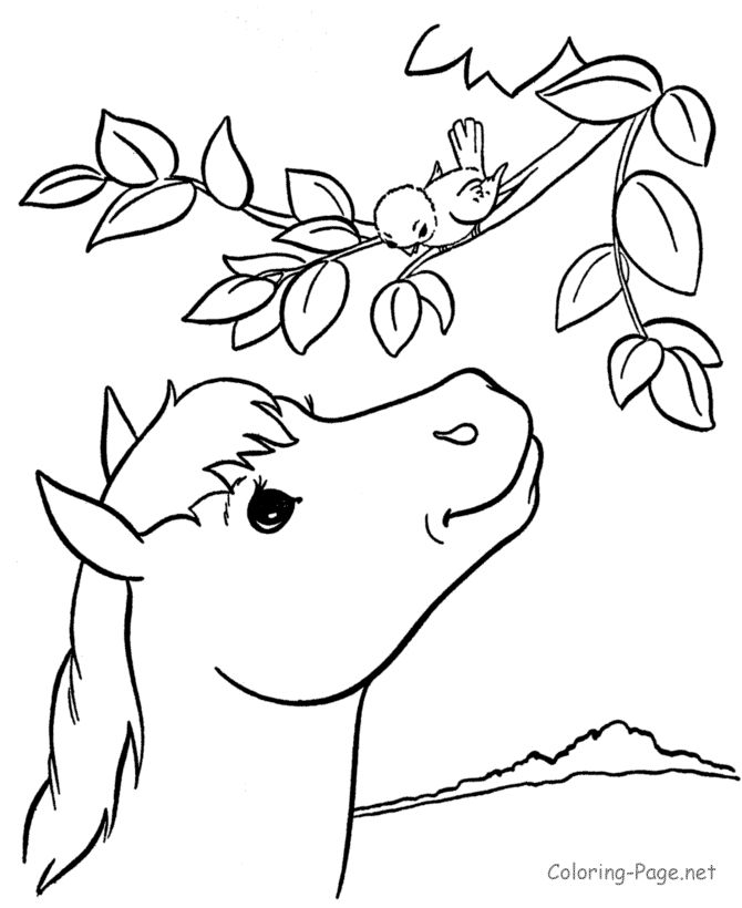 Horse Coloring Page Free Country Farm Of Animals Sheets