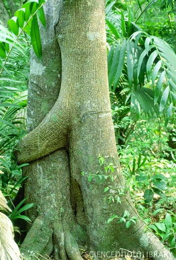 "Tunku Abdul Rahman Park, Sabah, Borneo.  Love this tree ""hugging"" another tree!"