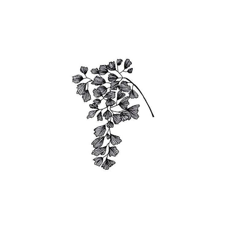 Maidenhair fern illustration. #illustration #sketch #botanical
