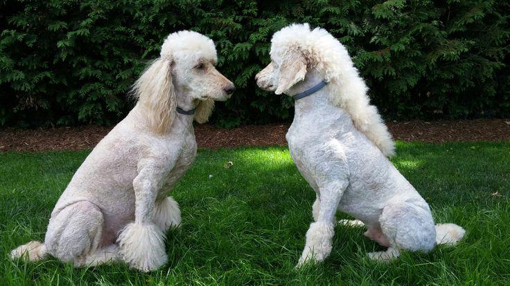 Yogi and Babe  <3