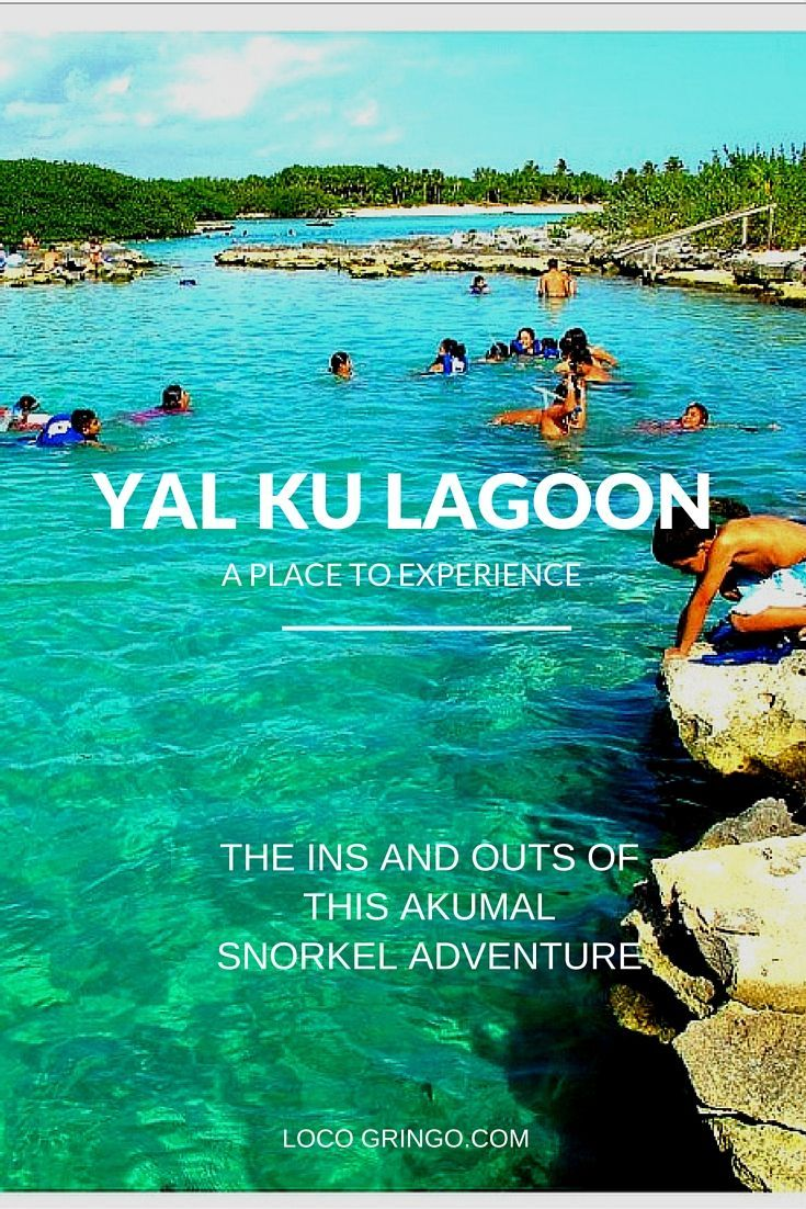 Yal Ku Lagoon, a unique snorkeling adventure in a coastal lagoon. This natural estuary is full of both fresh and salt water fish in an area no deeper than 10 feet/4 meters. Families, beginner snorkelers or those seeking calm waters with an easy entrance gravitate to the area in search of fish and sea life.