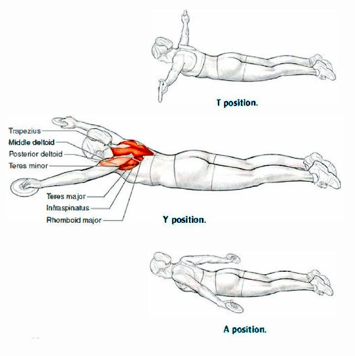 Dryland exercises for swimmers: CRAWL Photo