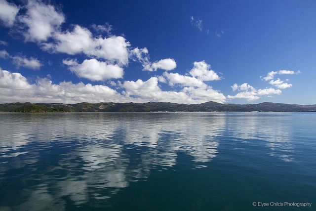 Wellington Harbour   © Elyse Childs Photography
