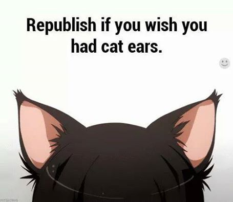 I really want to just be a cat!! Never mind the ears!!!