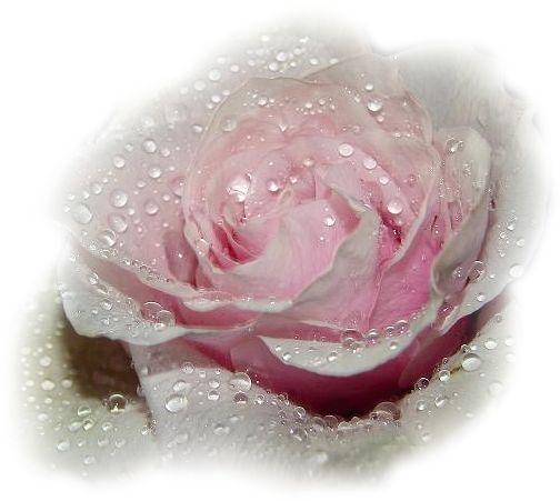 Kardvirágok,Virágcsokor,Margaréták,Cserepes virágok,Nem szeretsz jobban,Szép virágcsokor,Csillagvirág,Fehér orgona,Gyönyörű rózsa,Kék virág, - tripike Blogja - 3D animációk 01.,3D animációk 02.,3D animációk 03.,3D animációk 04.,3D animációk 05.,3D animációk 06.,3D animációk 07.,3D animációk 08.,3D animációk 09.,3D animációk 10.,3D animációk 11.,3D animációk 12.,3D animációk 13.,3D animációk 14.,3D JPG,Alkalmi ruhák 1.,Állatok 1.,Állatok 2.,Állatok 3.,Animációk 1.,Animációk 2.,Animációk…