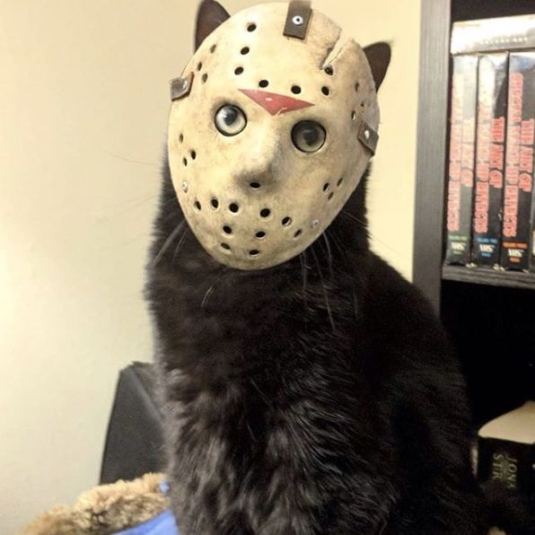 Reblogo uns memes in 2020   Happy friday the 13th, Scary ...