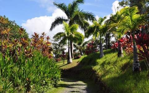 On the mauka side of the Hana Highway, half-mile past mile marker 10, you'll find The Garden of Eden Arboretum & Botanical Garden. We usually don't go…