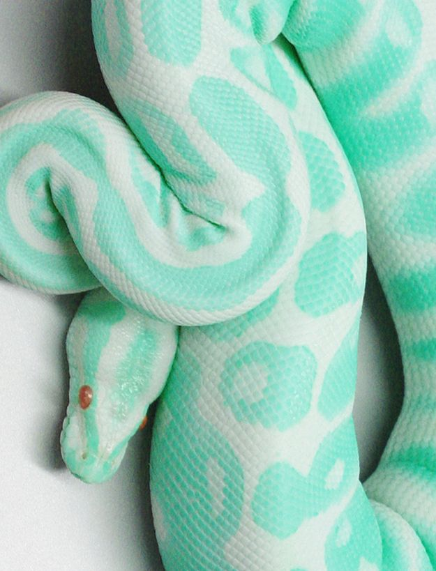 is this thing real?! i HATE snakes but what a pretty color!