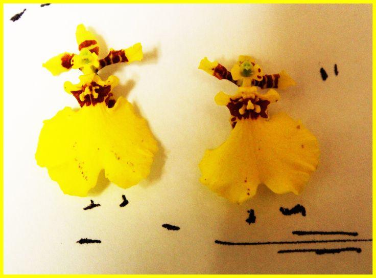 orchidee ballerine